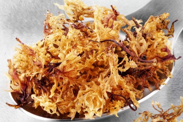 is sea moss a superfood
