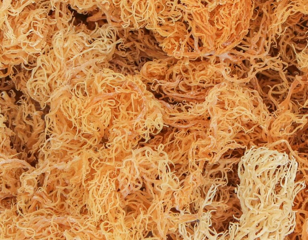 what is sea moss a superfood 2